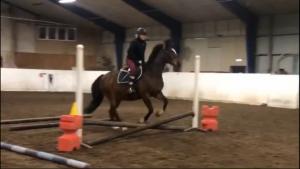 kvinna på häst hoppar över väldigt lågt hinder